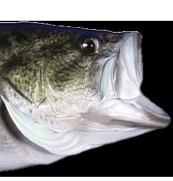 Bass with Flex Eye